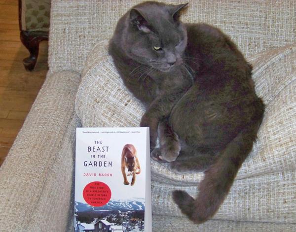 Benjamin the bookstore cat