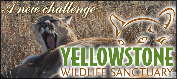 Wildlife sanctuary header